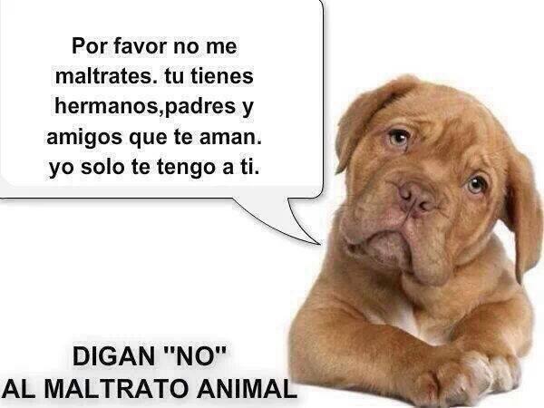 NO AL MALTRATO ANIMAL....