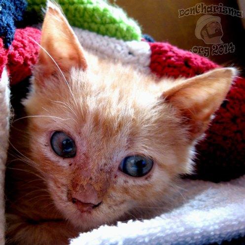 DonCharisma.org-Kitten-morgueFile