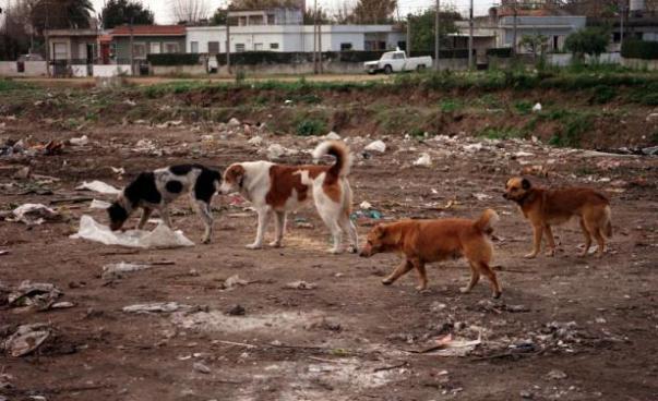 castracion de perros