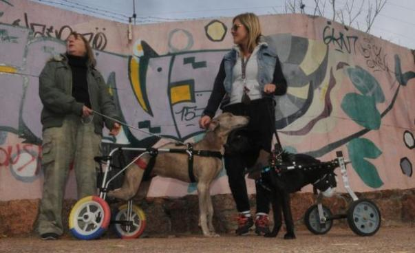 sillas para perros discapacitados
