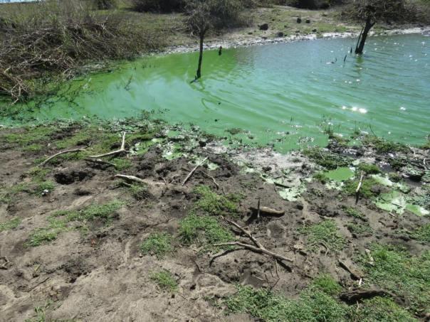 Río-Negro-cianobacterias-2